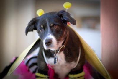 Halloween Dog Contest